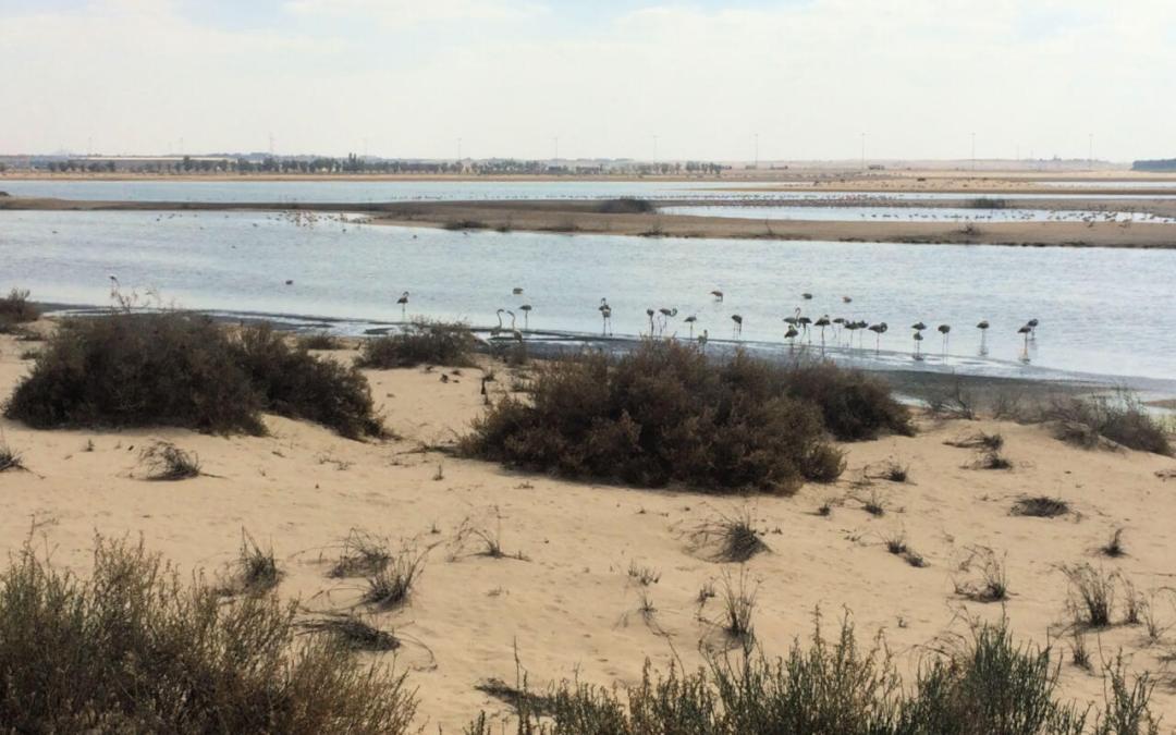 Flamingo watching at Abu Dhabi's Al Wathba Reserve
