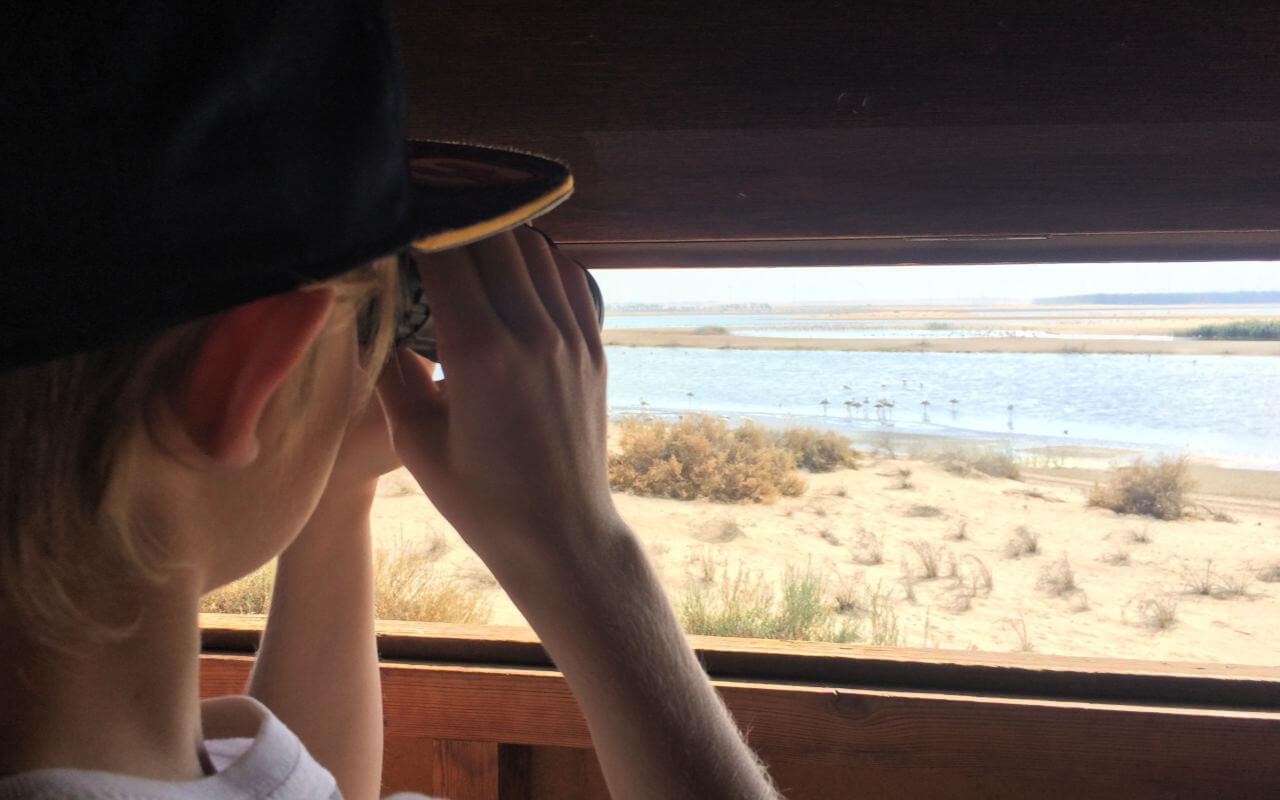 Flamingo spotting from the hides at Al Wathba Wetlands