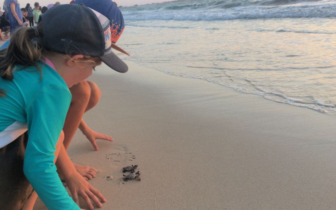 Seeing sea turtles released in the UAE
