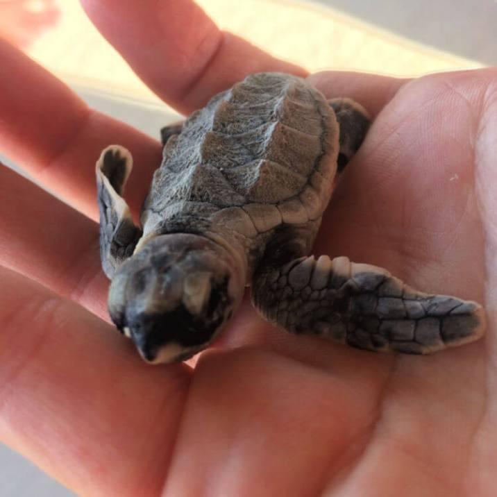 Turtle Release 03