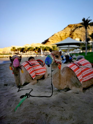 Pony and camel rides by the beach Barr Al-Jissah Resort Oman