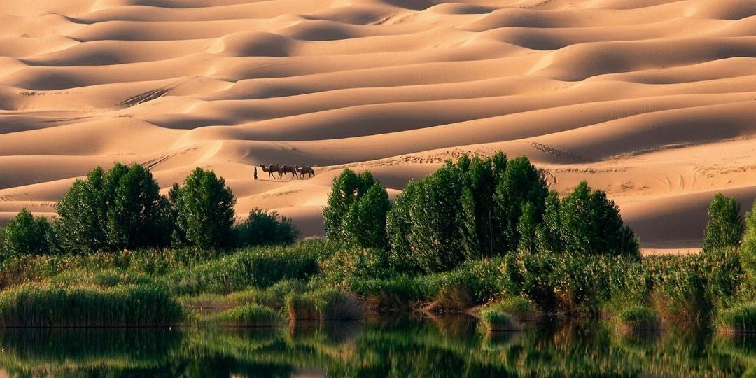 Liwa Oasis Abu Dhabi emirate