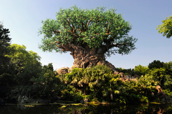 The Tree of Life at Animal Kingdom in Disney World