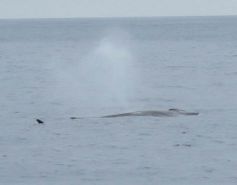 Our Whale Watching Experience in the Azores