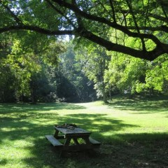 Day Trip from Louisville:  Bernheim Arboretum and Forest