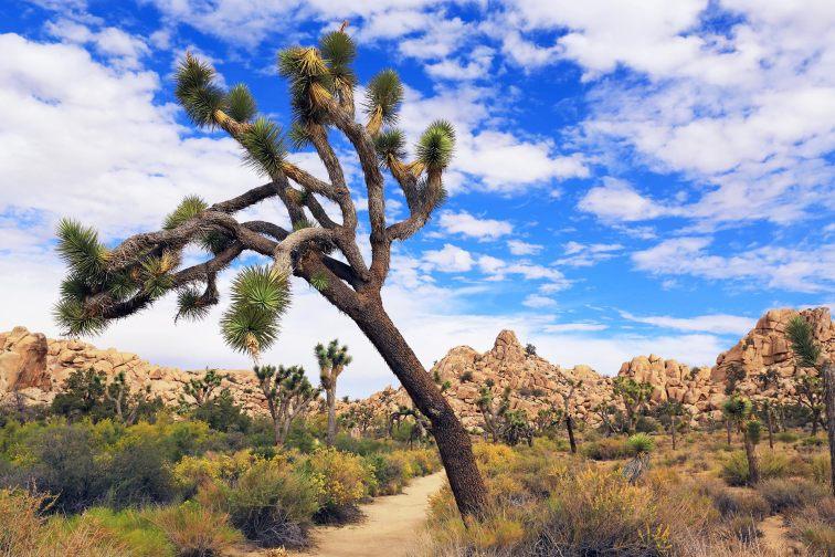 Joshua Tree National Park in California