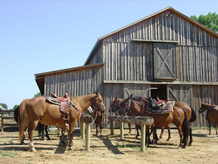 Horses Outside the Barn at KD Guest Ranch in Ohio