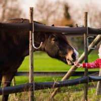 Toddler Petting Horse; Courtesy of FamVeld/Shutterstock.com