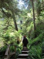 Rainforest Trail in Tofino; Courtesy of hlseldon/TripAdvisor.com