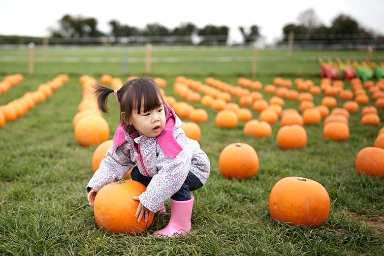 oddler girl picking pumpkin in farm ; Courtesy of Mcimage /Shutterstock