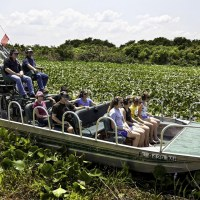 air boat rides at the Westgate River Ranch Resort & Rodeo; Courtesy of at the Westgate River Ranch Resort & Rodeo