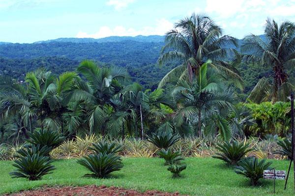 Croydon Plantation in Montego Bay, Jamaica.