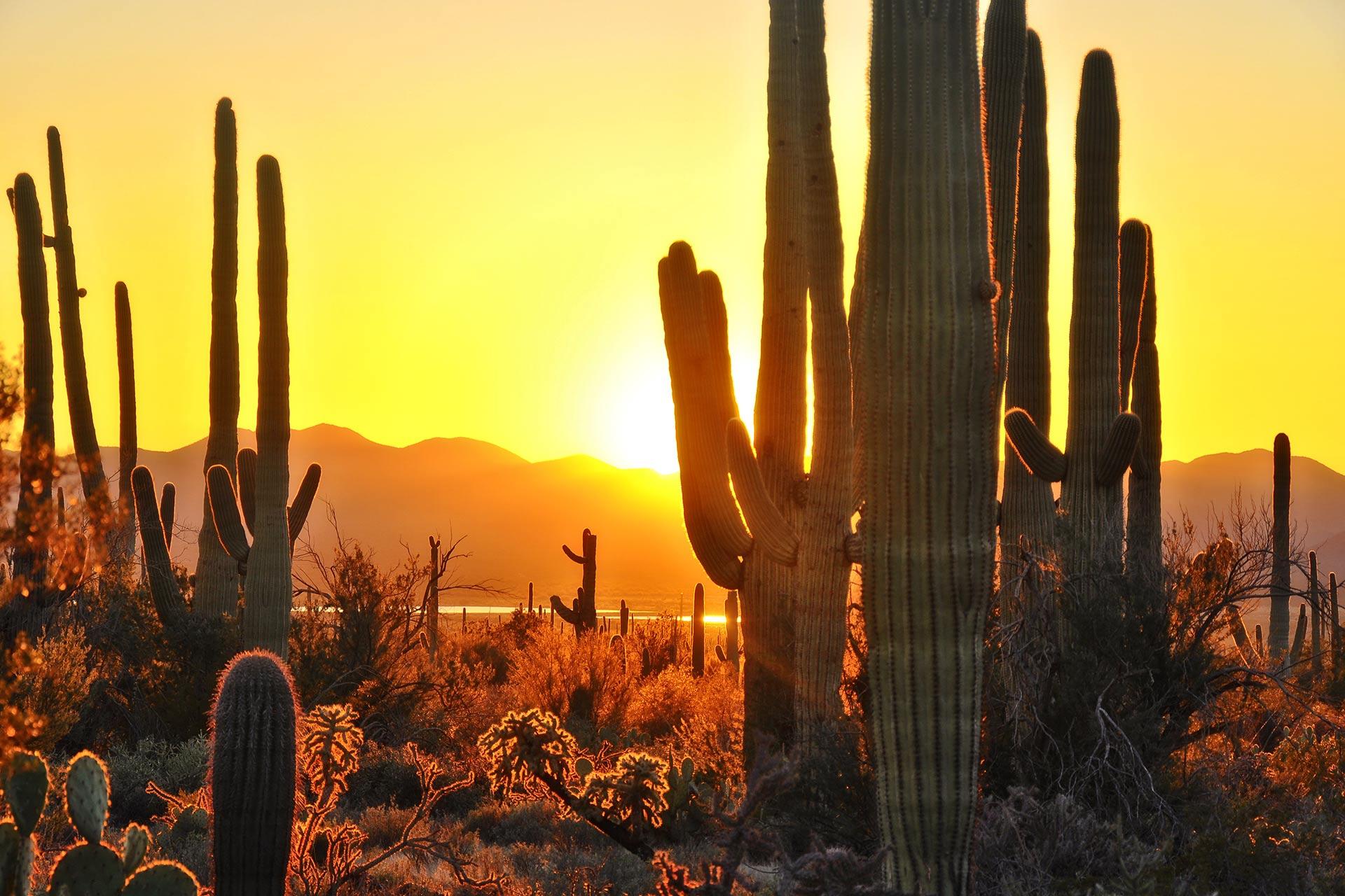 Beautiful cacti in Saguaro National Park near Tucson, Arizona.