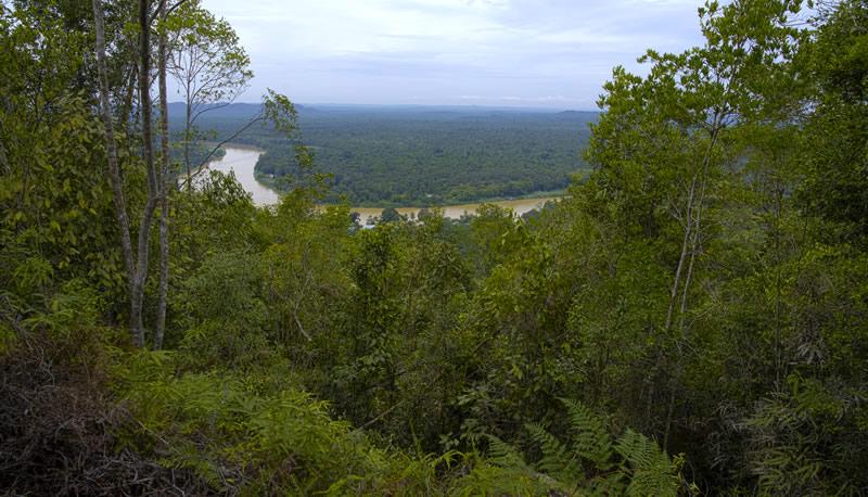 La giungla del Borneo fiume Kinabatangan