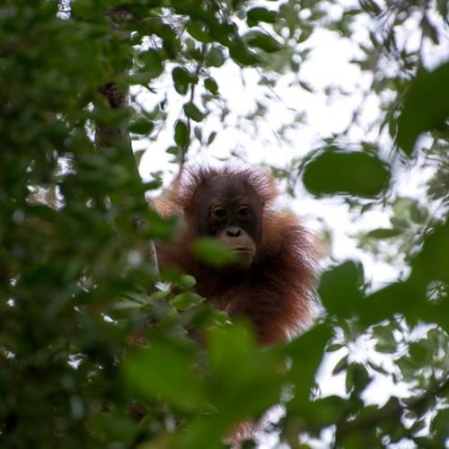 Malesia Borneo