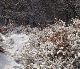 2009_01_paysage_neige_yvelines_manet_0023___800x600