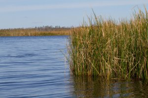 The-Good-Citizens-Marsh-Grass