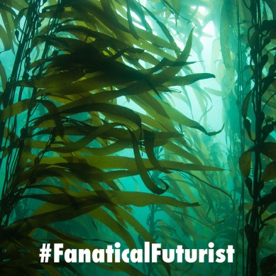 Biofuels made using giant Pacific Kelp elevators could power a tenth of all US transport