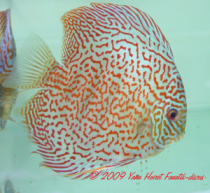 Photo Discus turquoise