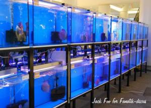 Aquariums du concours Aquafiesta 2009
