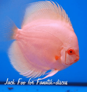 Discus Grand Champion Aquafiesta 2009