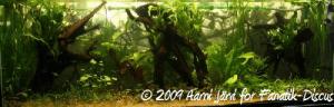Aquarium en préparation pour les discus