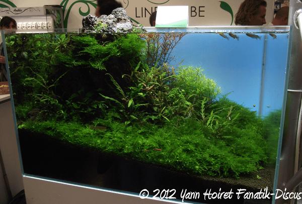 Aquascaping  Oliver Knott stand Anubias Nurnberg 2012