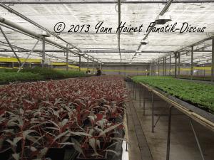 Aquatic plants producer Aquafleur: feet mother