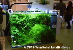Aquarium planté Vivarium 2018 Pays-Bas