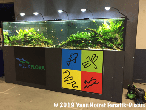 Aquarium XL plante au Vivarium 2018