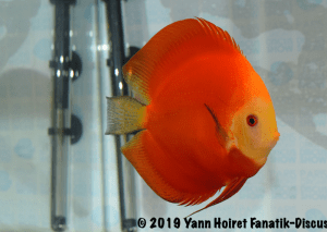 2ND red meeting discus de Paris Discus show 2019