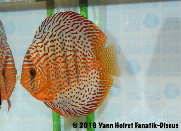 3RD large spots meeting discus Paris Discus show 2019