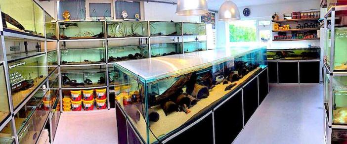 Magasin d'aquariophilie Aqua Amazon
