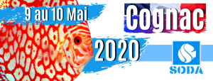 France Discus Show FDS 2020
