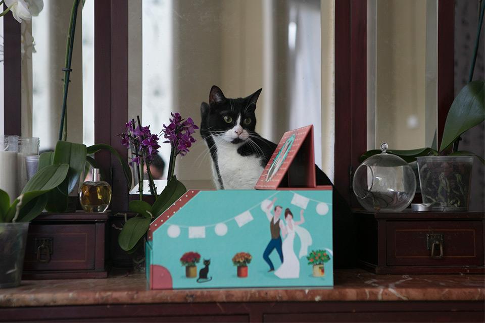 gato-y-caja-de-fotos-de-boda