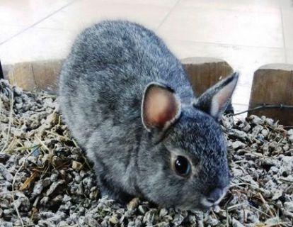 Conejo fanmascotas. Tienda de animales. Dependiente de mascotas.