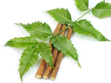 El uso de aceite de Neem (Azadirachta indica) comienza a estar muy extendido para eliminar parasitos en jardineria y en mascotas. Está presente en la pipeta o collar.