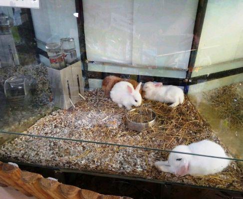 Expositor de conejos en una tienda de animales. Están separados por un cristal que es el blanco de manotazos, puñetazos y patadas. Dentro de la cristalera se escucha retumbar los golpes.