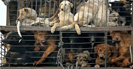 Domesticación de animales, su paso a mascotas 3