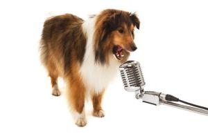 Canciones de mascotas.