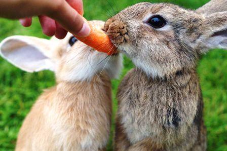 Plantas venenosas para conejos enanos 3