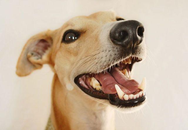 Limpiadores dentales para perros sonrisa