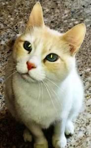 Primera consulta veterinaria gato