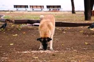 perro sin comedero para perros