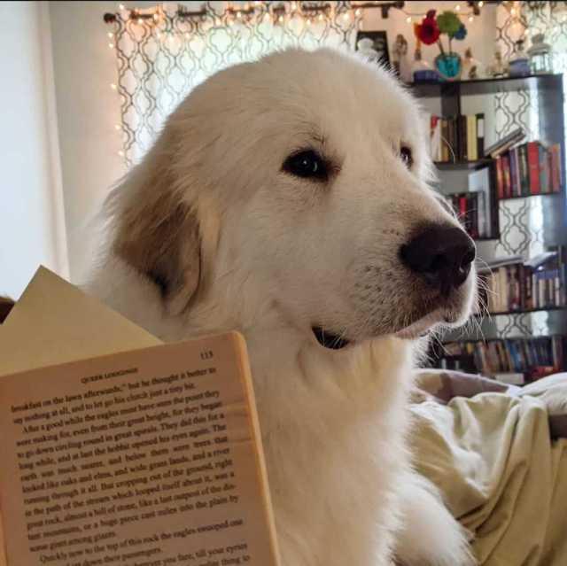 libro de mascotas reflexiones entre mascotas opiniones
