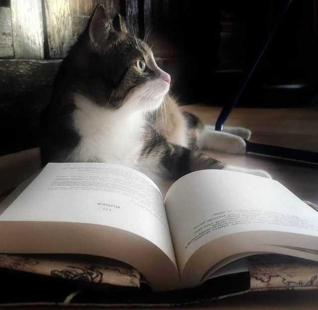 libro de mascotas para adolescentes