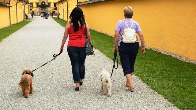 Comprar comida para el perro da pie a compartir impresiones con el dependiente