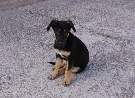 A Lasy la adopté casualmente, tras leer un anuncio de regalo mascota. No podía vivir en un piso porque lo estaba destrozando.