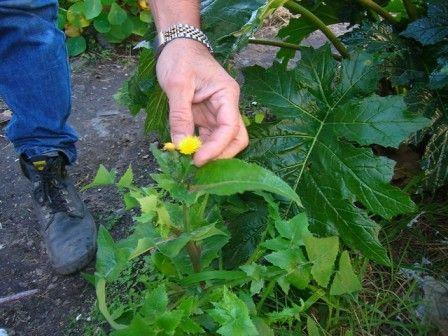 Los alimentos para tortugas de tierra pueden salirte bien baratos si reconoces las plantas en el campo.
