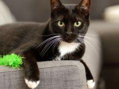 Dar un gato en adopción